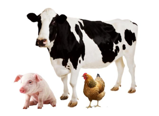 kwas mlekowy w żywieniu